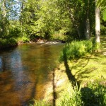 Jõgi juunis